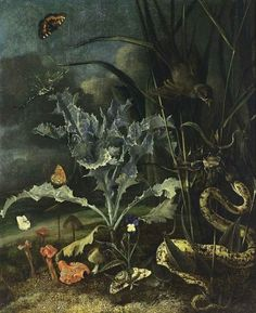 Forest Floor Still Life by Otto Marseus Van Schrieck, a Dutch painter best known for mysterious dark close-ups of the live undergrowth of forest floors that give detailed views of   wild flowers, weeds, thistles, and mushrooms, lives of insects.