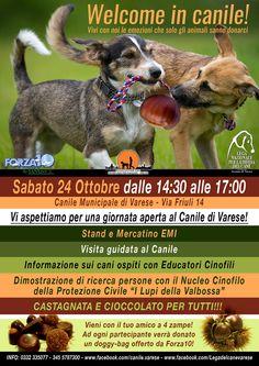 #welcomeincanile - 24/10 Castagnata c/o #canile di #Varese con i #volontari della @legadelcanev