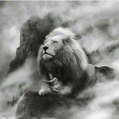 Lion of Judah Art Prophétique, Lion Love, Lion Wallpaper, Tribe Of Judah, Lion Pictures, Prophetic Art, Photo Chat, Lion Of Judah, Lion Art