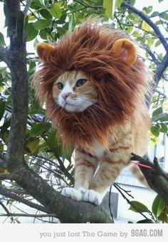 Furrrocious Kitty! Pet Cat Costumes