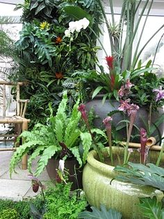 Tropical garden idea. Great use of containers