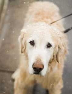 White Long Coated Medium Size Dog With Black Lace  Free Stock Photo