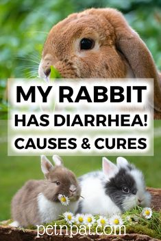 My Rabbit Has Diarrhea! Causes Cures Of Rabbit Diarrhea Animals For Kids, Cute Baby Animals, Animals And Pets, Funny Animals, Farm Animals, Animal Quotes, Animal Memes, Best Pets For Kids, Pet Rabbit