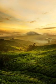 Cameron Highlands, Malaysia - One of the most beautiful places I've been