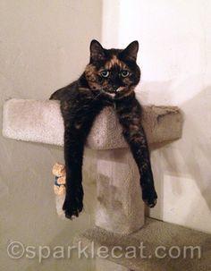 My roommate Binga... on MY cat tree!