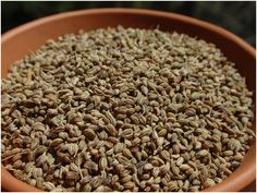 Ajwain seeds are great medicine for your infant. Read the benefits here