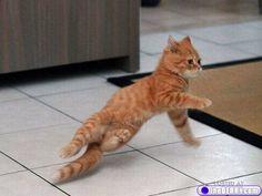 break dancing  kitten Dancing Animals, Dancing Cat, Animals And Pets, Funny Animals, Cute Animals, Cute Cats, Funny Cats, Pub Vintage, Breakdance