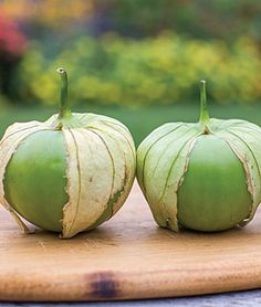 Tomatillo, Gulliver Hybrid || Sow in January and July || Plant in March and September