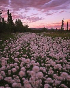 Dandelions light soft and hopeful just like everything she wants to be and uphold.