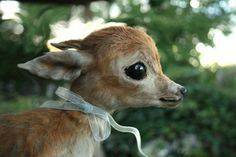 Oh deer, I am so adorable...