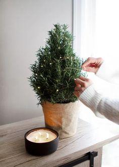 Rosemary Christmas Tree, Potted Christmas Trees, Live Christmas Trees, Winter Christmas, Christmas Time, Christmas Lockscreen, New Years Tree, Traditional Christmas Tree, Alternative Christmas Tree