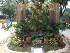 Bromeliad and orchid display