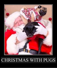 Christmas with Santa and Pugs!