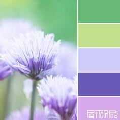 Let's start Monday with a happy palette :) Floral Fresca #patternpod #patternpodcolor #color #colorpalettes