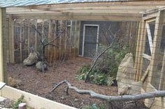 Toledo Zoo - Pheasantry - Satyr Tragopan Exhibit