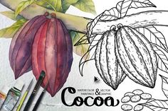 Watercolor and graphic Cocoa plants Graphics Realistic cocoa fruits with leaves, row and dried, on the branch and with opened beans, in different by Ekaterina Glazkova Watercolor Plants, Watercolor Texture, Watercolor And Ink, Plant Illustration, Pencil Illustration, Graphic Illustration, Cocoa Plant, Cocoa Fruit, Christmas Coloring Pages