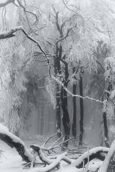 Eerie misty forests, covered in frost and muffled by snow, the bare black bones of tree branches as stark as wrought-iron fence posts… Winter Szenen, Winter Love, Winter Magic, Winter Trees, Winter Photography, Nature Photography, Winter Poster, Oc Pokemon, Snowy Forest
