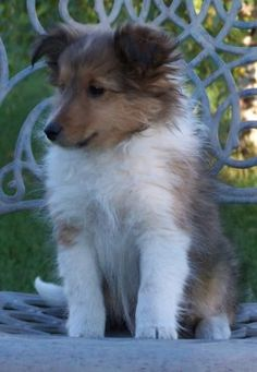 Jake, the ultimate love of my animal life, looked like this as a baby.  Miss him everyday.