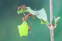 MIcropolis, France. Fantastisch! Het leven van de grootste tot kleinste insecten.