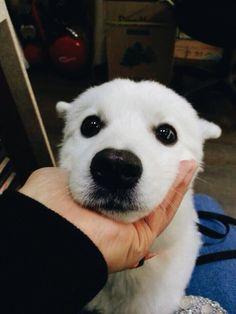 BANGTAN PETS | RAP MON