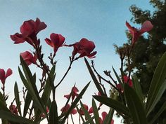 "25 Me gusta, 0 comentarios - Felipe Andrés Ibáñez Lagos (@felipe_ibanezlagos) en Instagram: ""#sunrise 🌺"" Instagram, Lakes, Places"