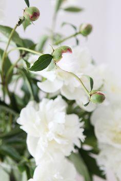 Flowers Archives | ZRIVNUTRO.com