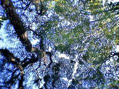 Céu azul e verde