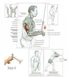 Best triceps workouts for mass and definition Before talking about exercises for the triceps, to tell you a few things first on this muscles. First triceps has three heads: the lateral, medial and long (the highest). So you have to … Continued