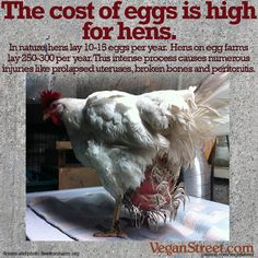 Modern egg production is completely unnatural, painful, debilitating and often deadly for the poor hens who produce the eggs