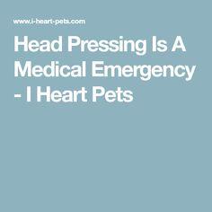 Head Pressing Is A Medical Emergency - I Heart Pets