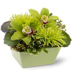 Go green, and make the world a better place! Send this glorious all-green floral arrangement - featuring chartreuse cymbidium orchids, spider chrysanthemums and assorted greenery, delivered in a matching green bowl - and you'll make someone's day.