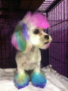 Top Performance Dog Hair Dye Gels Frida Pinterest
