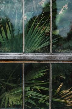Window, glass house, plant and flax HD photo by Craig Whitehead ( on Unsplash Plant Aesthetic, Nature Aesthetic, Aesthetic Green, Green Plants, Tropical Plants, Cambridge Botanical Gardens, Greenhouse Pictures, Nature Sauvage, Most Beautiful Gardens