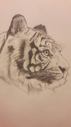 Tiger #pencil #drawing