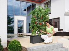 These 5 Self-Watering Planters Make Vegetable Gardening Easy