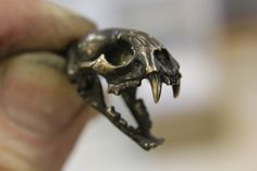 Wild Cat Skull w/ articulated jaw