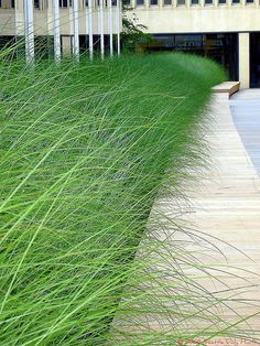 Long bench with grass as background...so beautiful