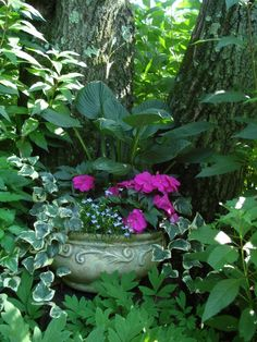 shade garden with hostas and impatiens and ivy in container...