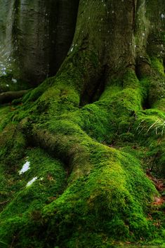 In the forest - Mossy Roots