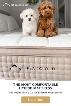 Discover the best luxury hybrid mattress using premium materials, quality craftsmanship, and an Everlong Warranty to bring you the best sleep of your life, guaranteed. Cute Baby Dogs, Cute Little Puppies, Cute Dogs And Puppies, Cute Funny Animals, Cute Baby Animals, Oui Oui, Dog Love, Fur Babies, Dog Cat