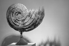 Nautilus by Amir Moeini on 500px