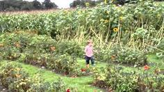 Pick your own flowers at Annemieke's pluktuin. Happiness!  I love handpicked 'wild' bouquets - I discovered this place when it was still a hidden gem (no worries, it's still a gem!) and it made me feel so happy - no need for mindfullness, flower picking will do the trick! Kids and mums will love Annemieke's pluktuin. No Worries, Bouquets, Gem, Happiness, Bright, Feelings, My Love, Places, Happy