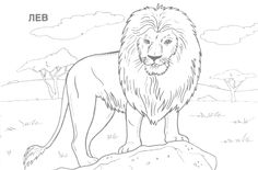 Coloring:Coloring Pages Hard Animals Printable Adult Coloring Pages Hard Animals