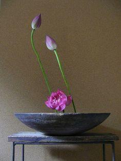 一花一葉 by アツシ One Flower One Leaf by Atsushi