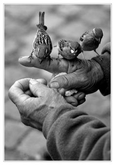 3 little birds with Davis' hand. The kids aw the birds and the song 3 little birds by bob marley.