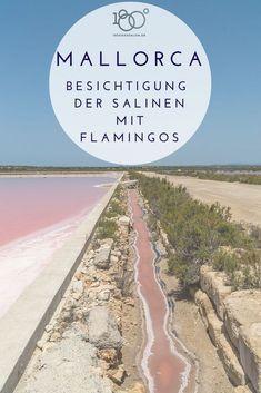 Mallorca Salinen Flor de Sal d'es Trenc. Die Mallorca Salinen besichtigen und alle Infos zur Führung der Salz Gewinnung auf deutsch mit Öffnungszeiten, Adresse und Preisen. Ausflug Tipp für die ganze Familie im Urlaub mit Beobachtung von Flamingos.