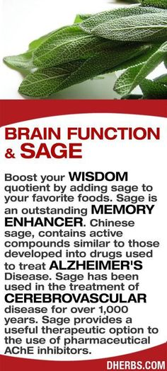 Boost your wisdom quotient by adding sage to your favorite foods. Sage is an outstanding memory enhancer. Chinese sage, contains active compounds similar to those developed into drugs used to treat Alzheimer's Disease. Sage has been used in the treatment Natural Medicine, Herbal Medicine, Chinese Medicine, Natural Cures, Natural Healing, Herbal Remedies, Health Remedies, Health And Nutrition, Health Tips