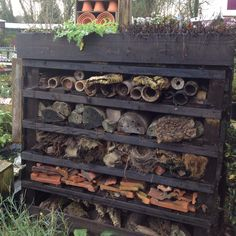 Bug hotel. Accommoda