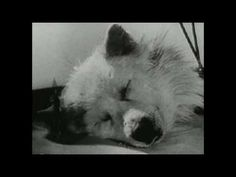 Experiments in the Revival of Organisms is a 1940 motion picture which documents Soviet research into the resuscitation of clinically dead organisms. It is available from the Prelinger Archives, where it is in the public domain. The British scientist J. B. S. Haldane appears in the films introduction and narrates the film, which contains Russia...
