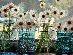 Daisies on the windowsill by hollybairy, via Flickr